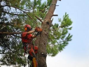 potatura abbattimento alberi